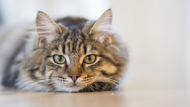 Cat of the Week: Martin