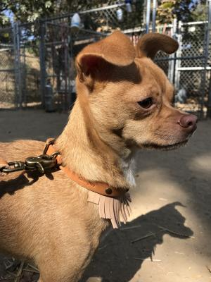 Dog of the week chico edhat if you cant come and personally introduce yourself to the dog go ahead and contact us at 805 964 4777 between 10 am and 5 pm monday saturday or email us solutioingenieria Image collections