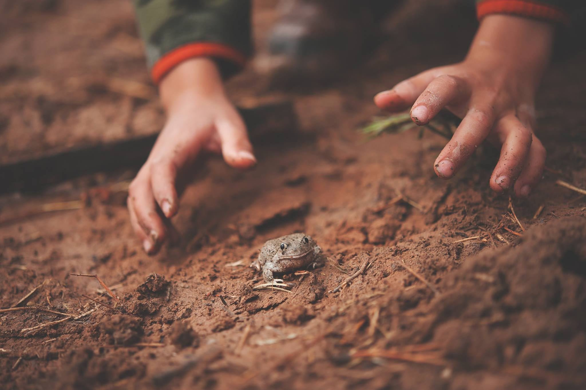 Science Pub: Discovering the Children & Nature Network