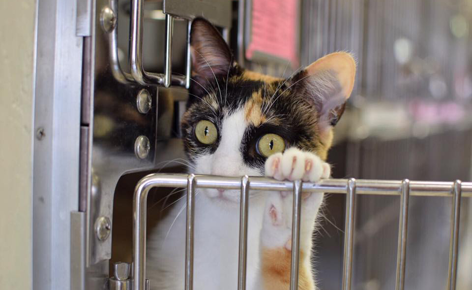 7th Annual FREE CAT ADOPTION Weekend Aug 12-13