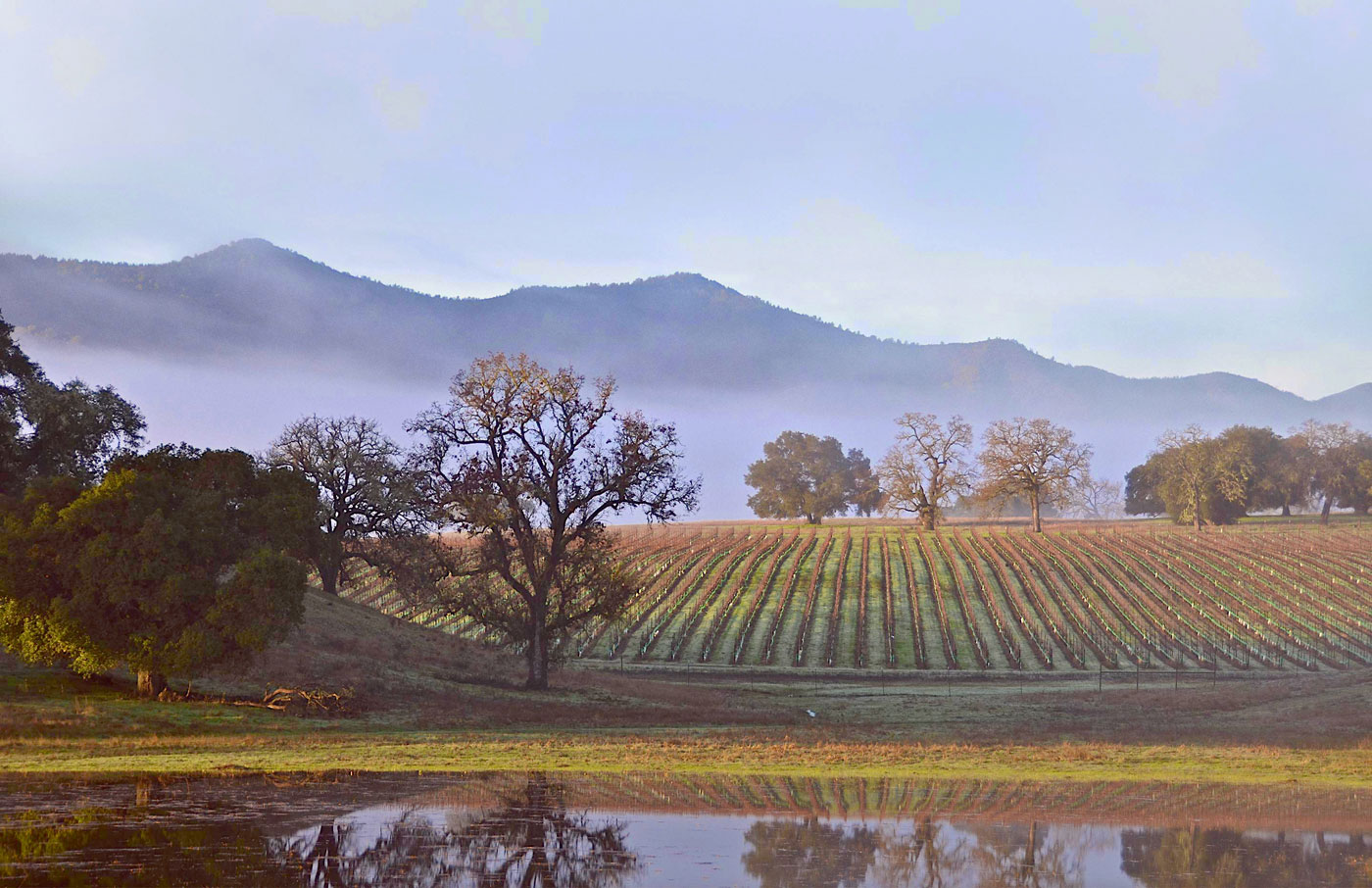 Wine Weekend - Inside Wine Santa Barbara title=
