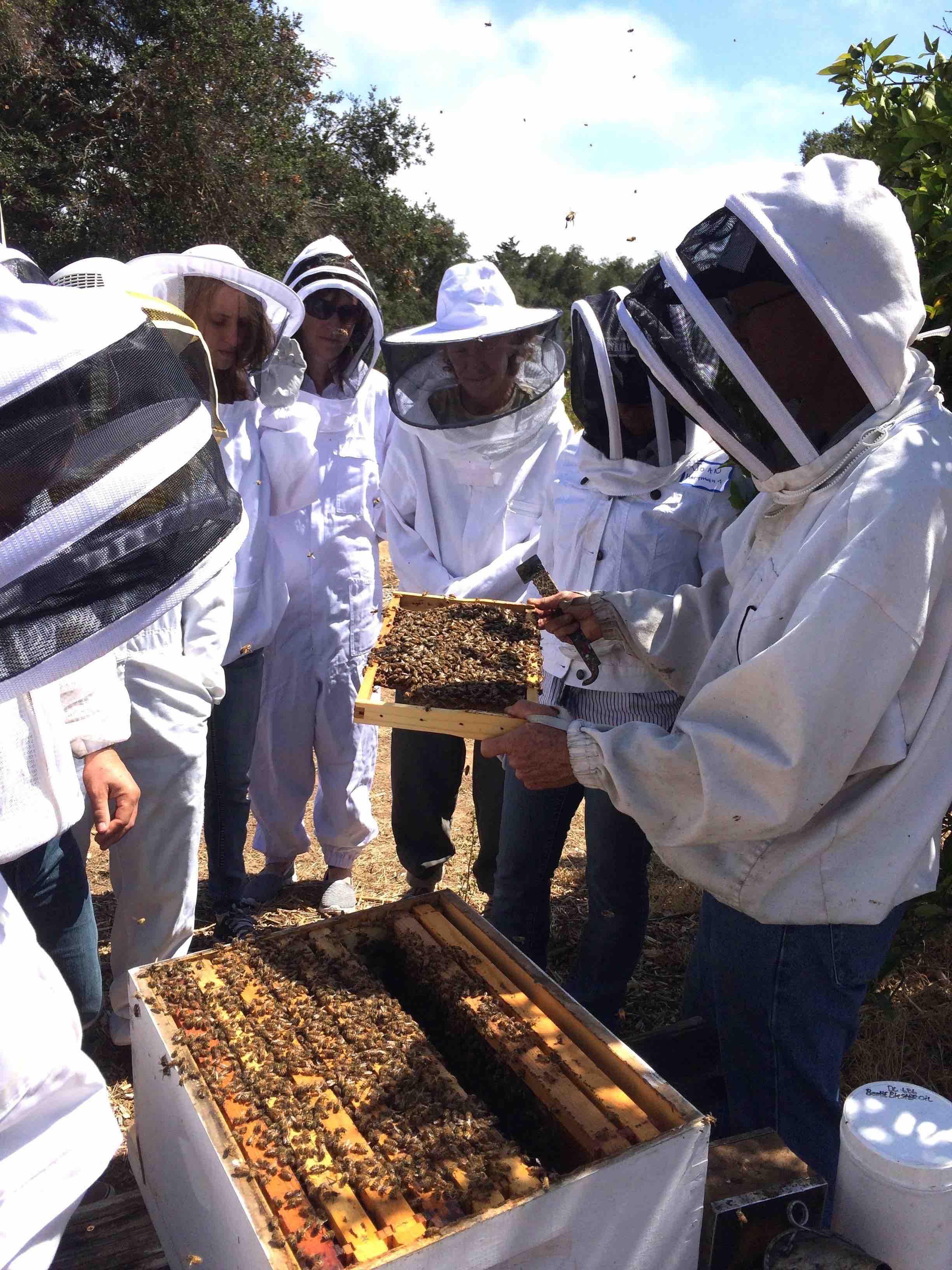 Beginning Backyard Beekeeping (B3) Certification Class title=