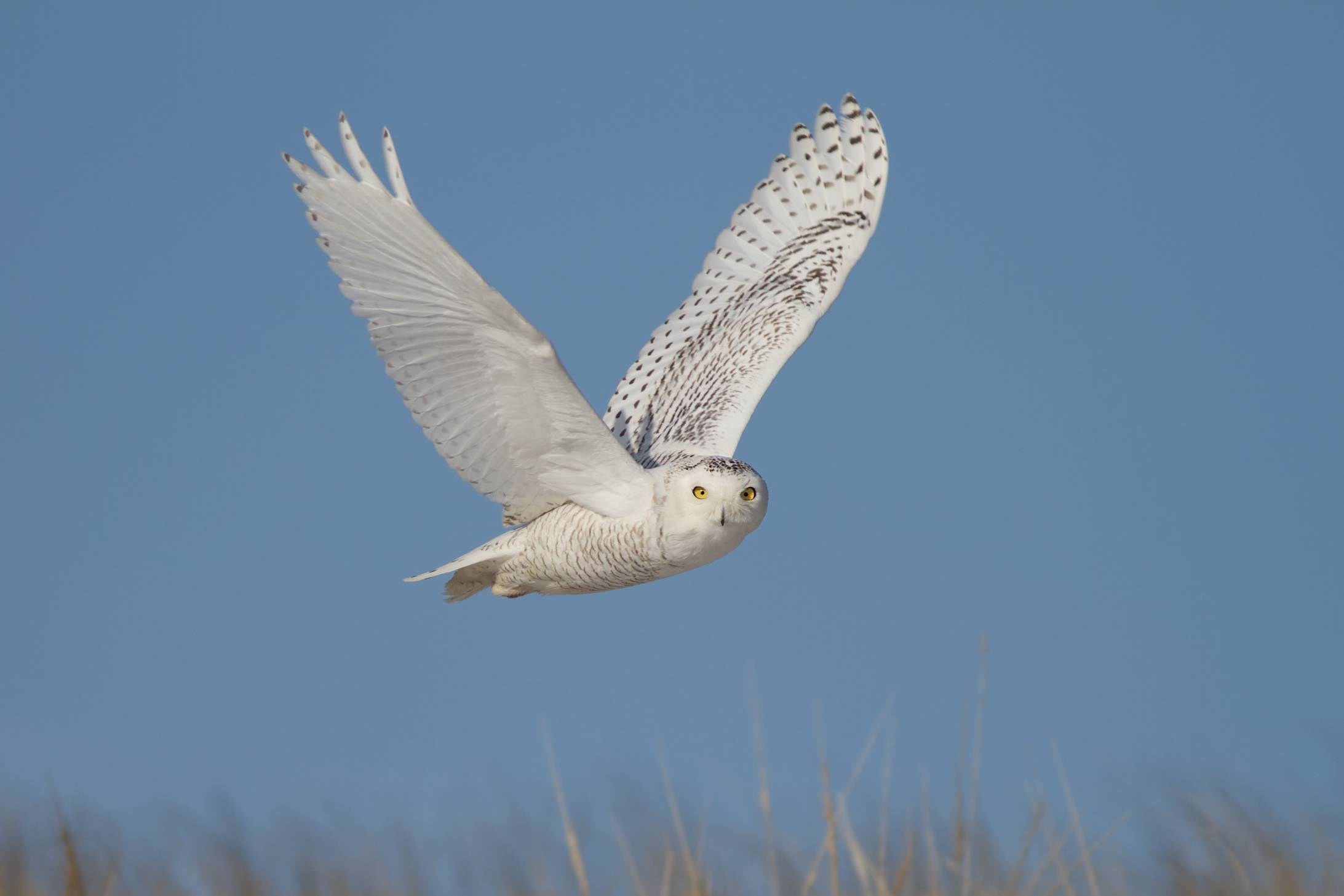 Three Billion Birds Lost: Free Talk with Kenneth Rosenberg title=