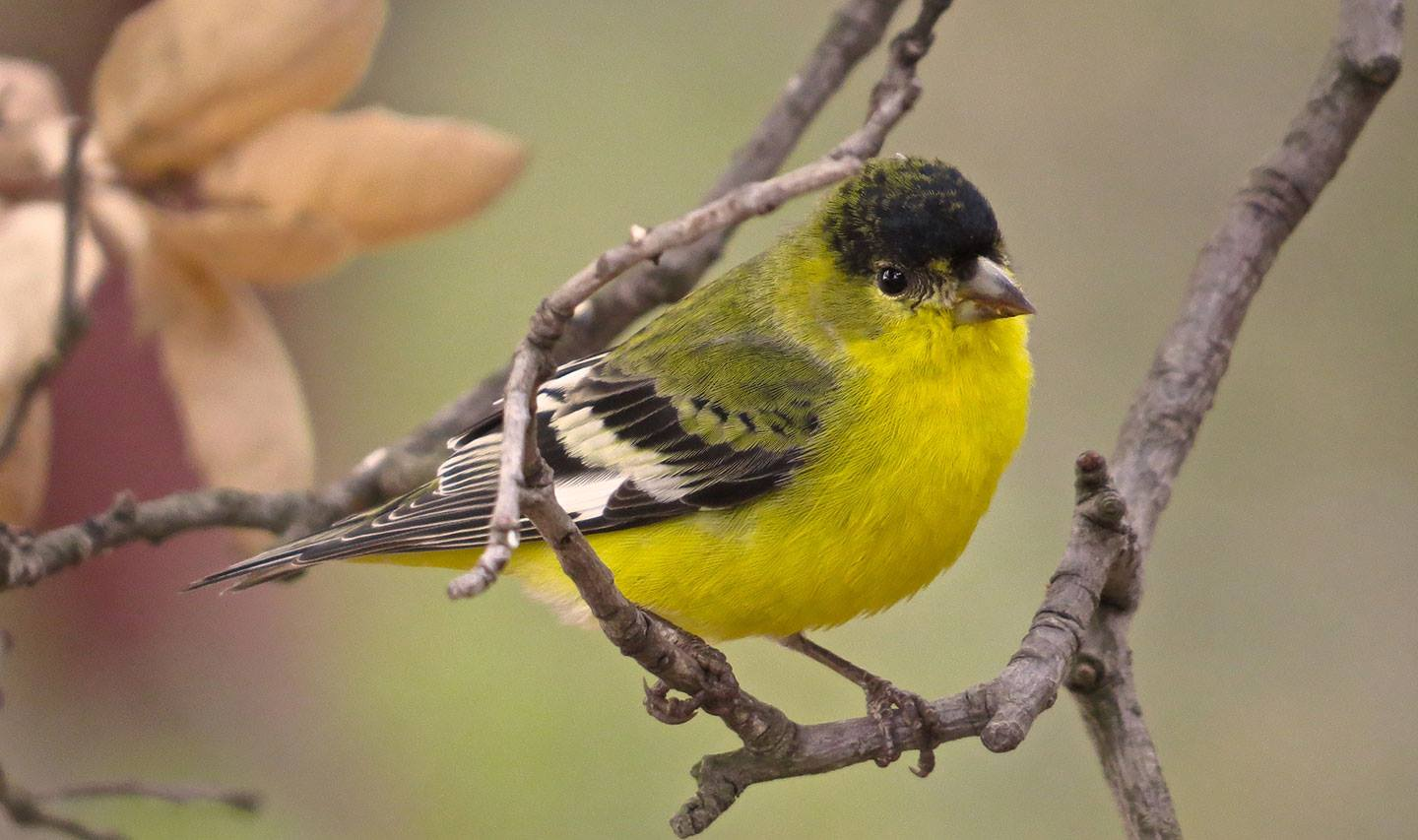 Birder's Delight with Ted Mullen at the Arroyo Hondo Preserve title=