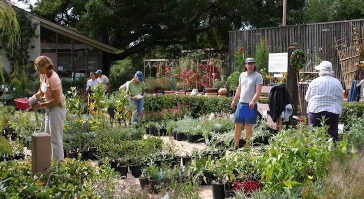 Fall for Natives at the Santa Barbara Botanic Garden title=