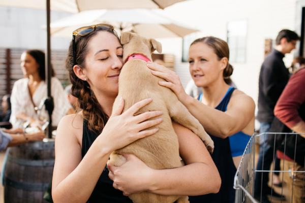 Wine & Woofs Adoption Event with Spark Rescue