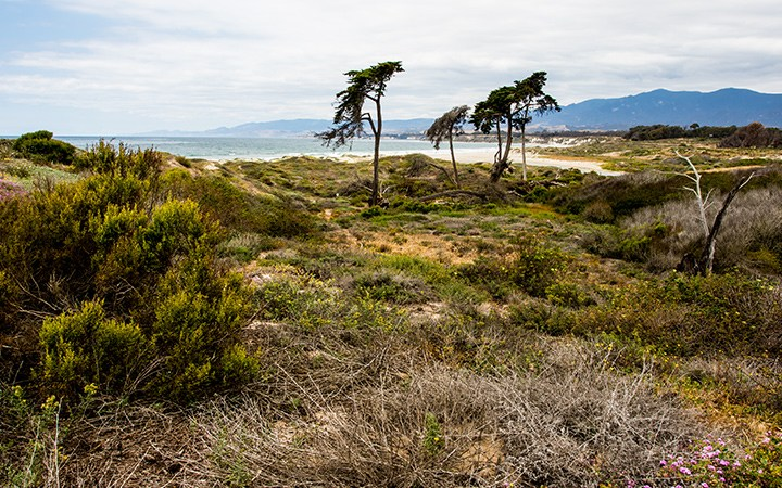 Guided Tour of Coal Oil Point Reserve title=