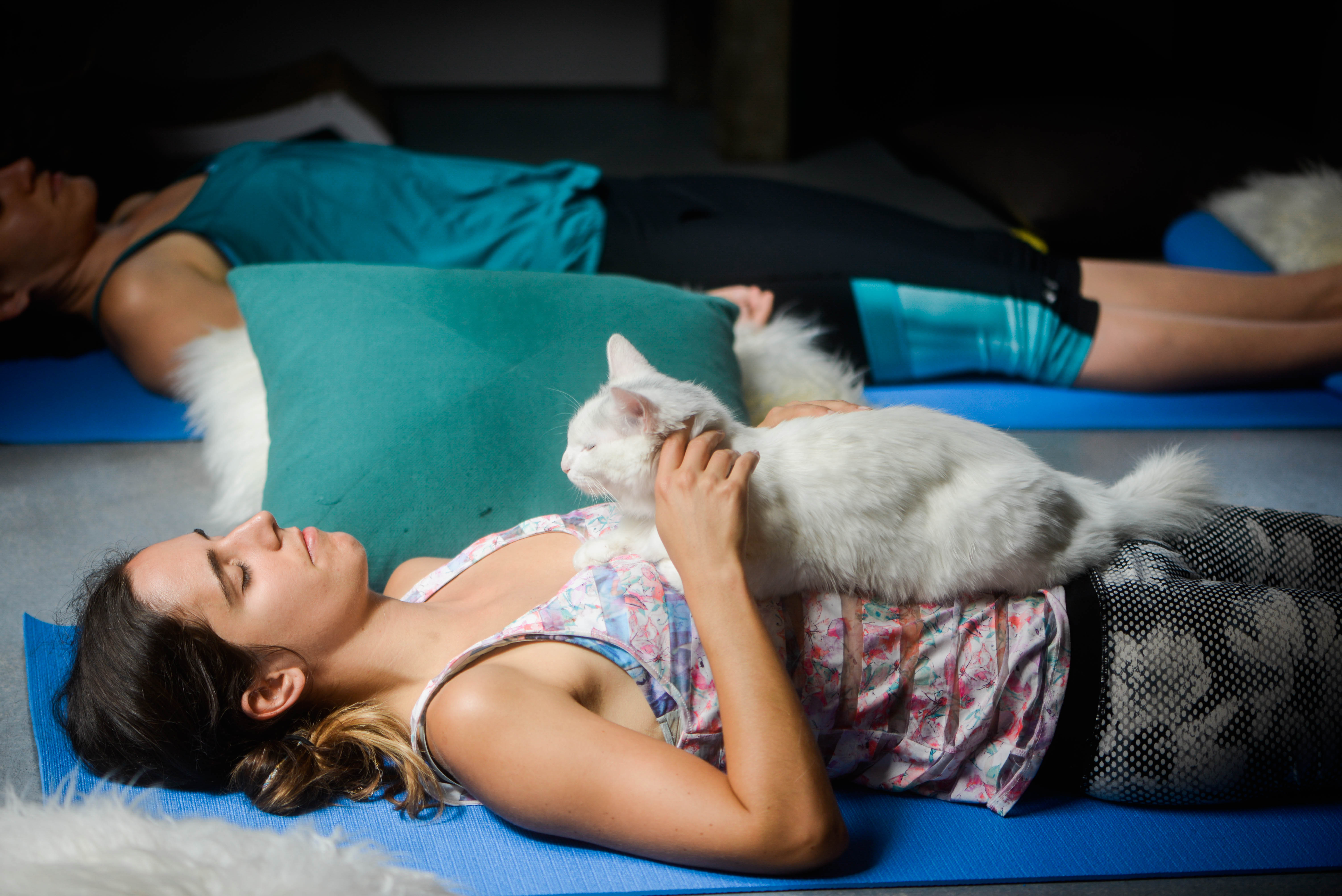 Cat Yoga at Cat Therapy title=