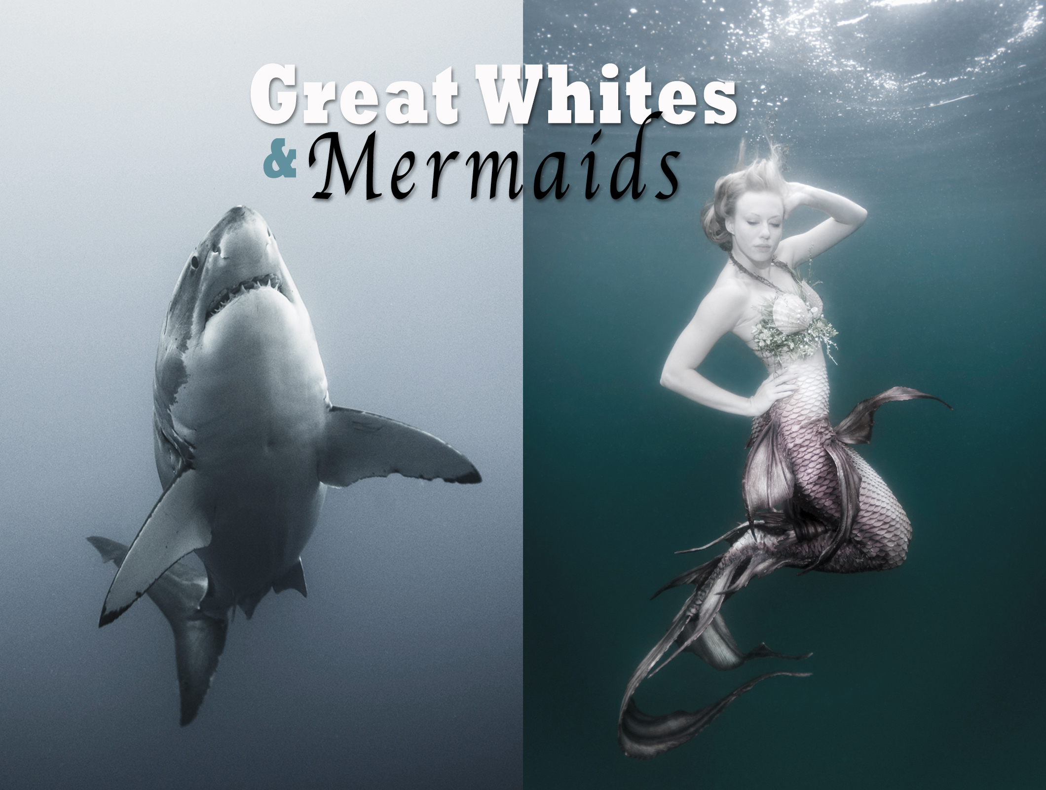 Great Whites & Mermaids  The Underwater Photography of Ralph A. Clevenger title=
