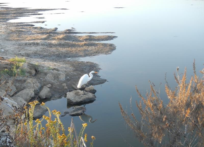 SB Audubon Friday Morning BirdWalk title=