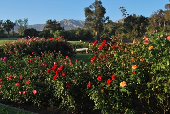 "April 11 declared ""Day of the Rose"" in Santa Barbara! title="