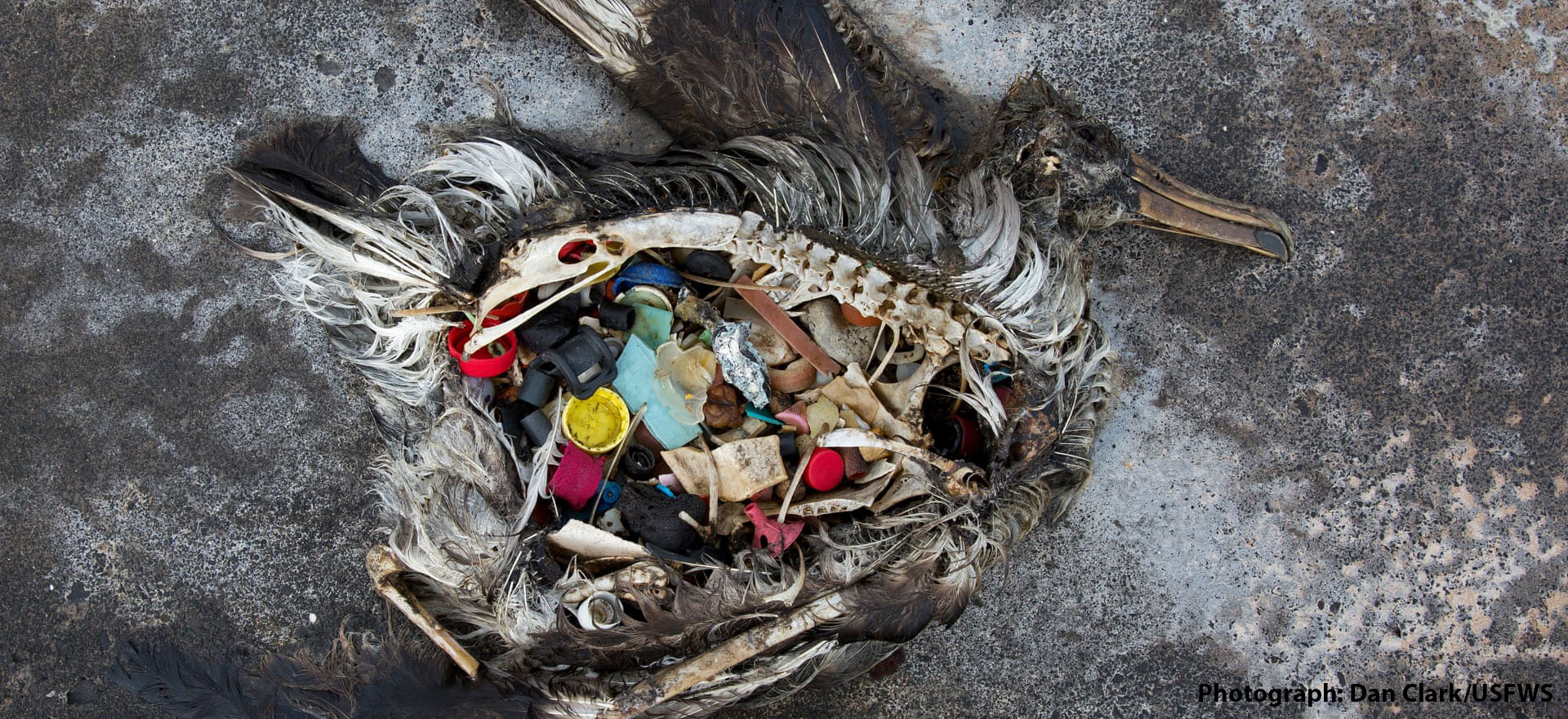 CRITICAL MASS INAUGURAL LECTURE: PLASTIC'S TIPPING POINT FT. ROLAND GEYER