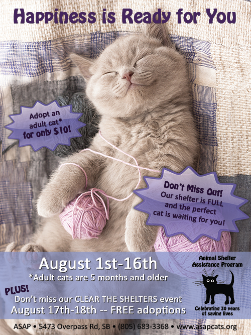 $10 Cat Adoptions at ASAP title=