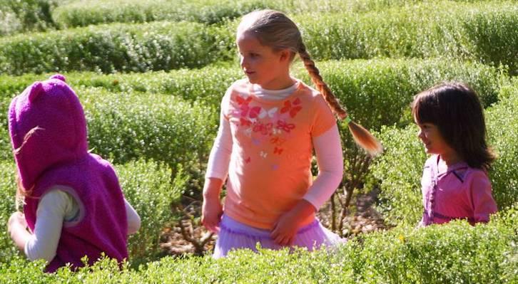 Santa Barbara Botanic Garden hosts Garden Casitas: Playhouses Designed with Nature in Mind title=