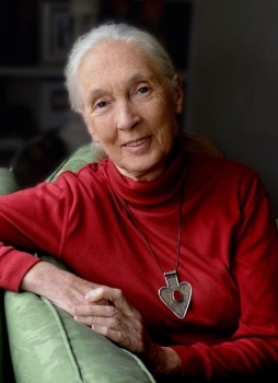 Founder of The Jane Goodall Institute and a UN Messenger of Peace Jane Goodall title=