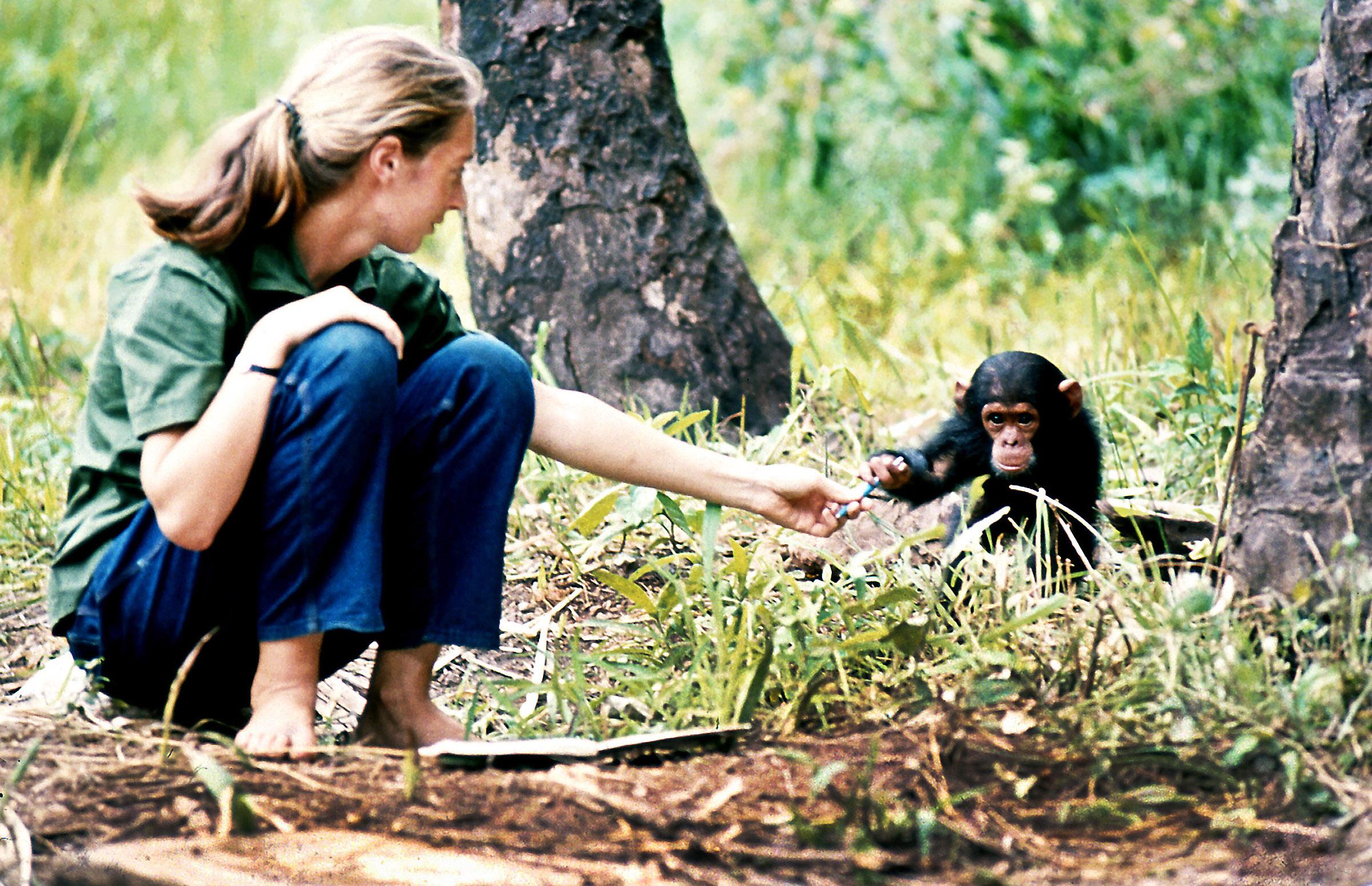 Dr. Jane Goodall, DBE title=