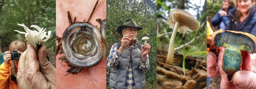 Lunch & Learn: Fantastic Fungi with Dr. Bob Cummings title=