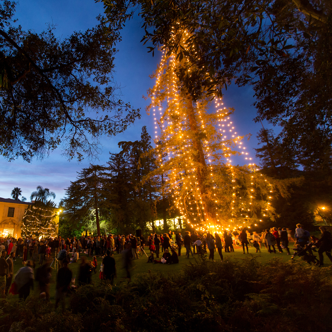 Westmont's 17th  annual pickle tree lighting  title=