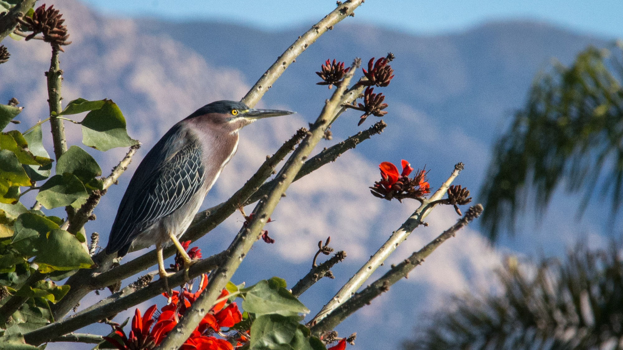 Birding in Santa Barbara: Connecting Us to the Wilderness title=