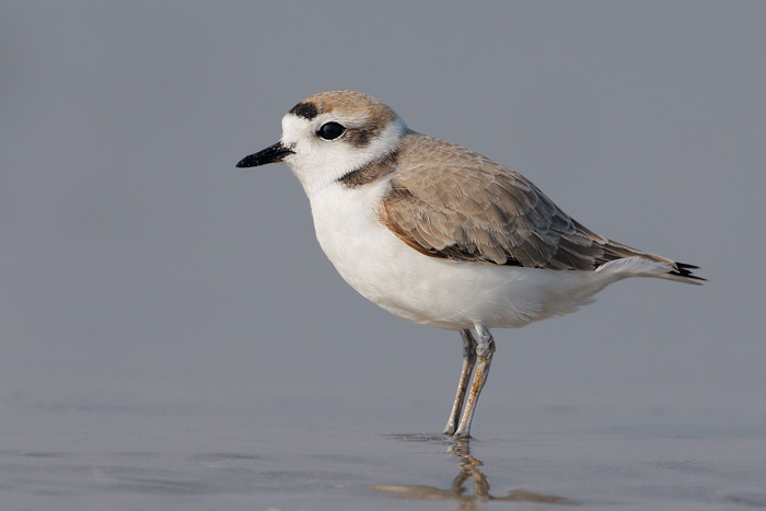 Snowy Plover Docent Training title=