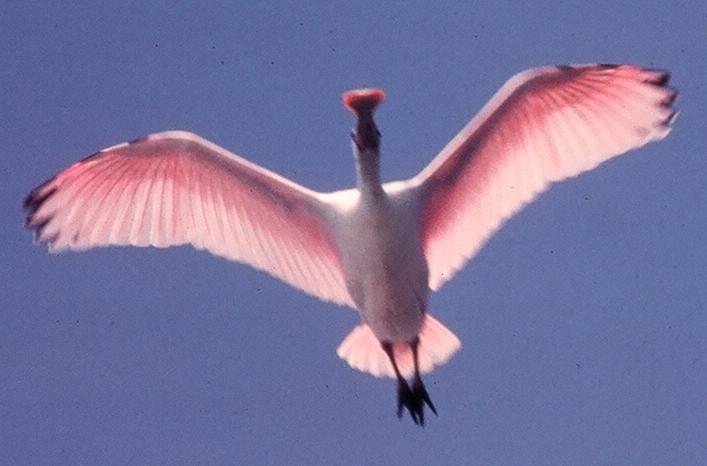 SB Audubon Evening Monthly Program: A Bird's Eye View of SW Florida title=