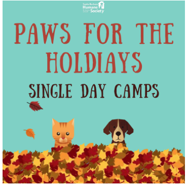 Paws for the Holidays Day Camps title=