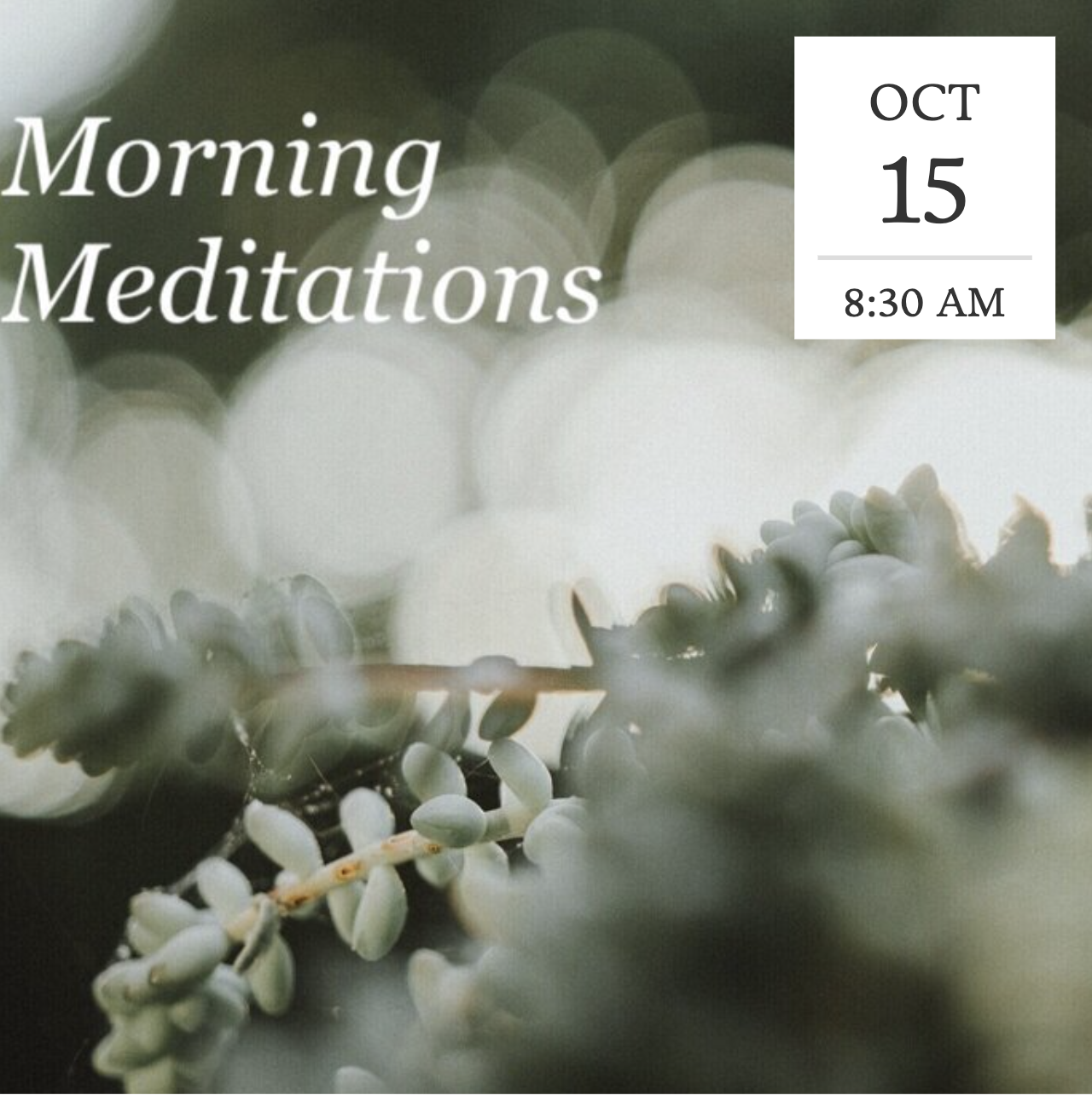 Morning Meditation title=