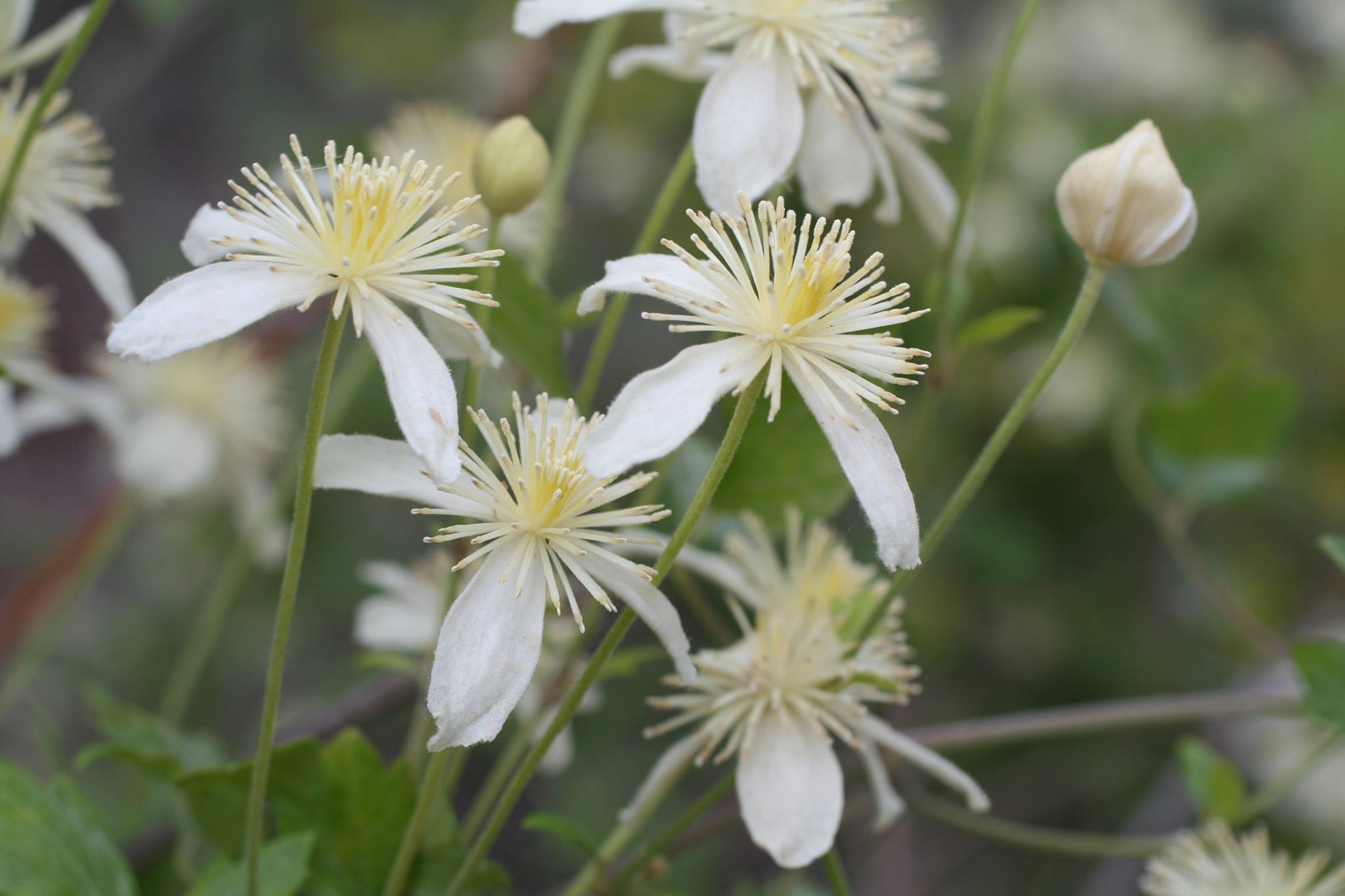 Spring-blooming Flora with Sally Isaacson at the Arroyo Hondo Preserve