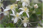 Land Trust Lunch & Learns: Spring Blooms with Sally Isaacson title=