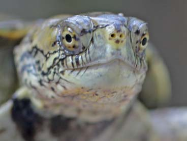 Amphibians and Reptikes with Dr. Sam Sweet title=