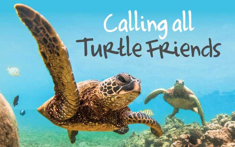 Paso Pacifico's 2nd Annual Turtle Friend Beach Party title=