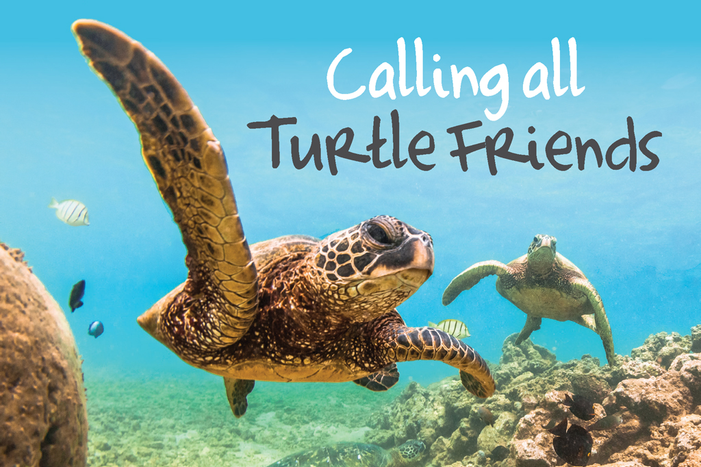 Turtle Friend Beach Party!  title=