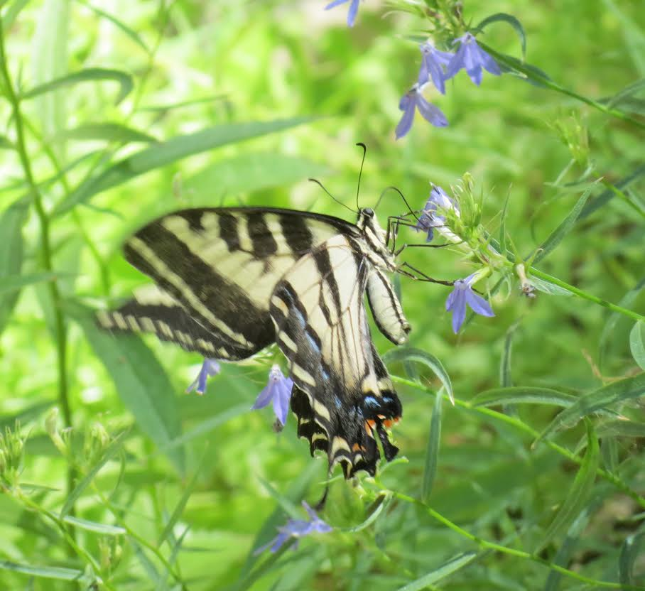 Trail Talk: Insects - The Good, The Bad, & The Bugly with Frederique Lavoipierre title=