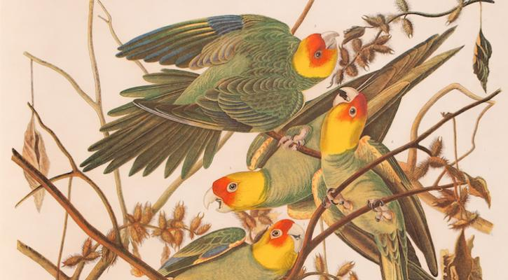 SB Museum of Natural History Opens Exhibition of Vanishing Birds title=