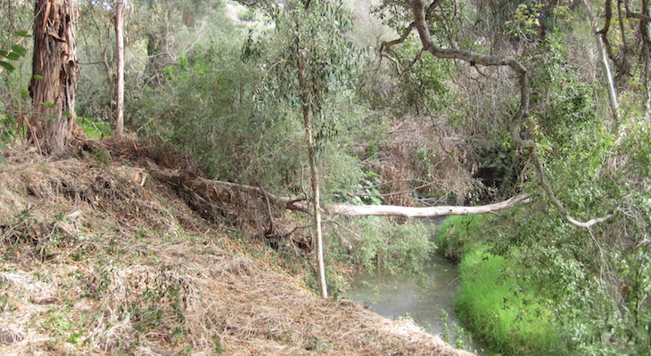 Ribbon Cutting Ceremony Scheduled for Arroyo Burro Open Space Restoration title=