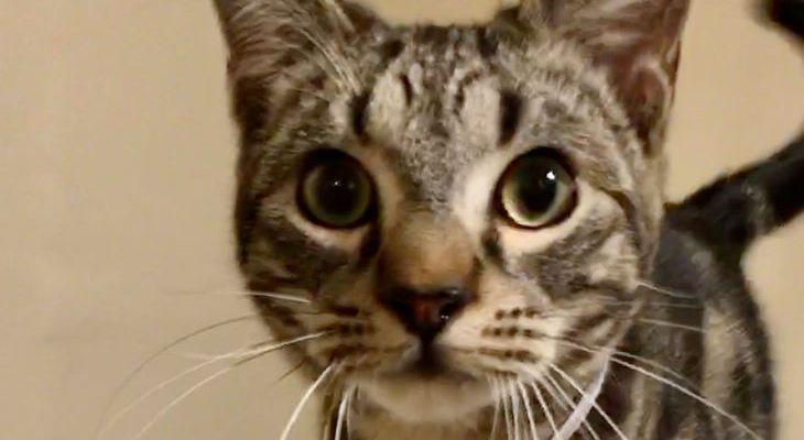 Cat of the Week: Agnus title=