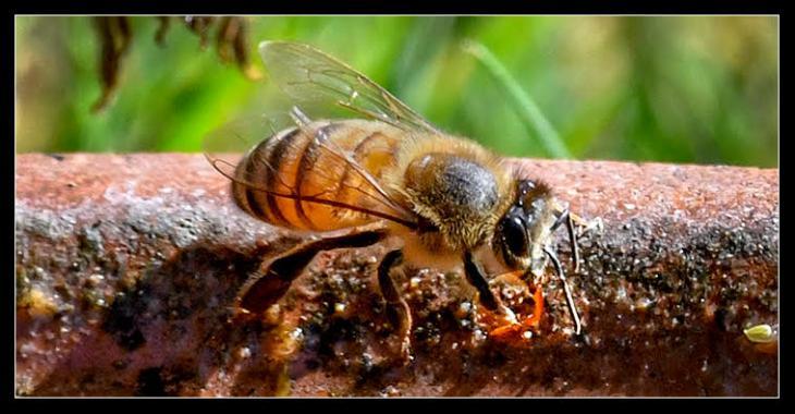 Honey Bee Meet and Greet
