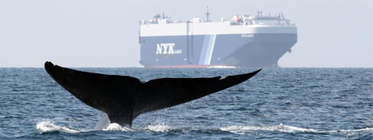 Protecting Blue Whales and Blue Skies Expands to Bay Area