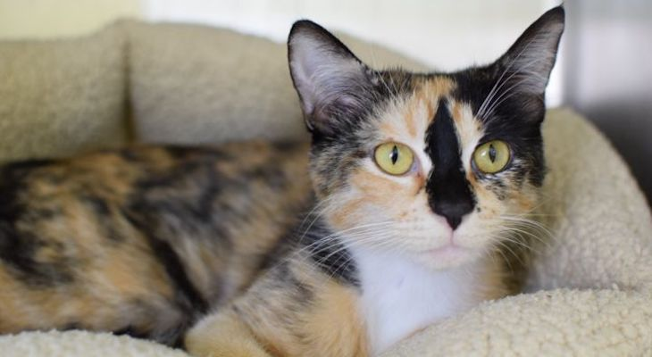 Cat of the Week: Clover