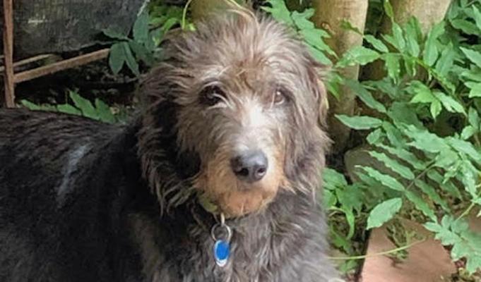 Dog of the Week: Dervla