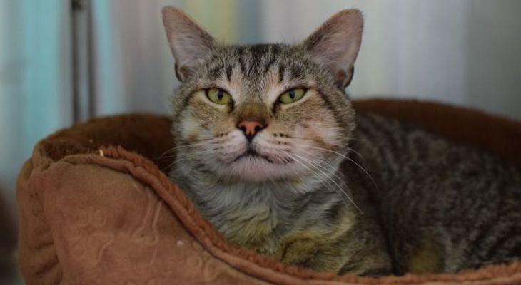 Cat of the Week: Edmond title=