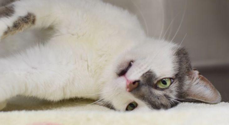 Cat of the Week: Emmett title=
