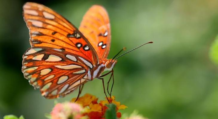 Butterflies Alive! and Prehistoric Forest Open May 25 title=