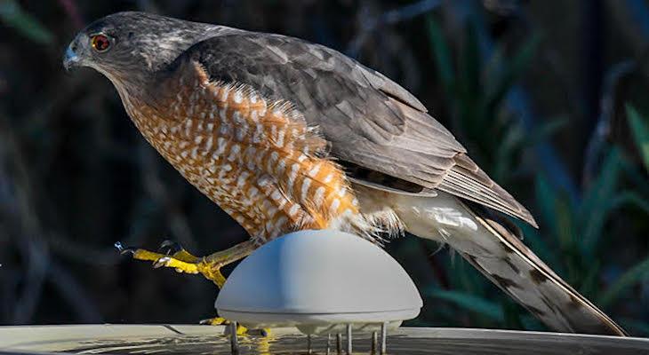 Birdbath Visitor title=