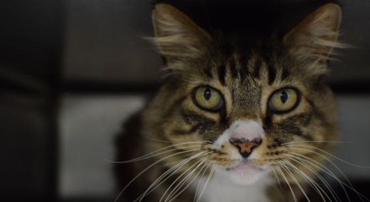 Cat of the Week: Huxley title=