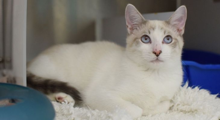 Cat of the Week: Jester
