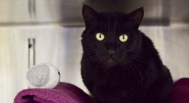 Cat of the Week: Milo title=