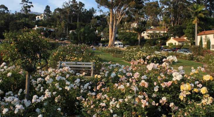 Volunteers Needed to Prune Memorial Rose Garden title=