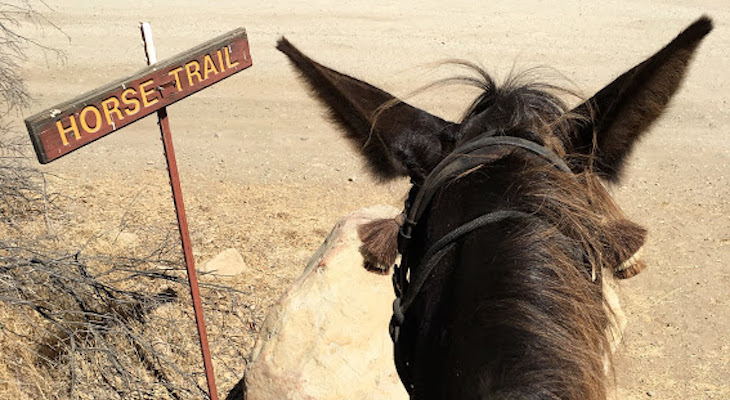 Upper Oso Canyon Mule Ride title=