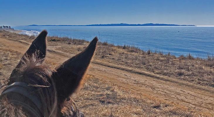 Winter Solstice Stroll at Ellwood Mesa